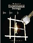 The Journal of Experimental Biology